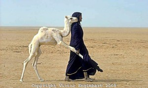 Perhaps Niefa's baby and Tin pulling her away from Niefa for milking?