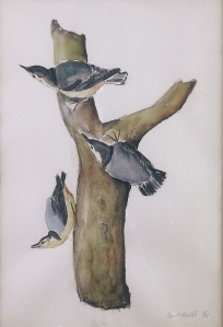"""Nuthatches"", watercolor, 2006, Jane Kohut-Bartels"