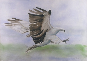 """Sea Eagle"", jane kohut-bartels, watercolor, 2001"