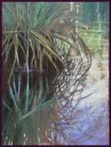 Marsh Grass 3