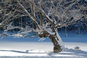 Winter Scene, 3