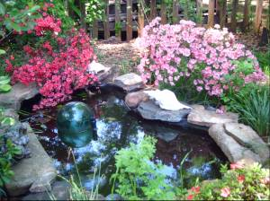 the fish pond this Earth Day