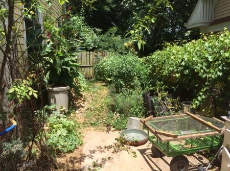 Garden July 1