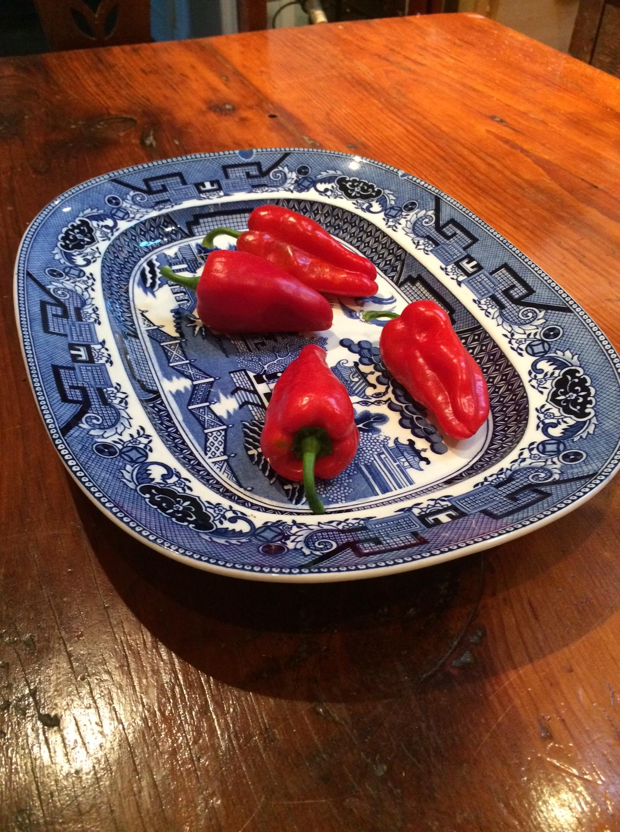 Garden peppers 2016.JPG