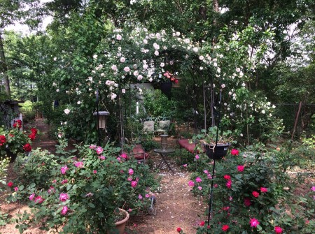 Rose Garden April 2017