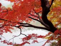 740962-Autumn-in-all-its-glory-1