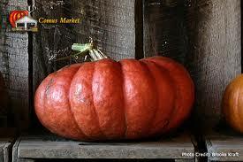 Cinderilla Pumpkin