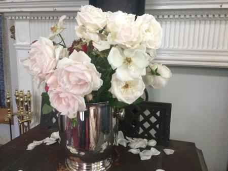Roses, May 3