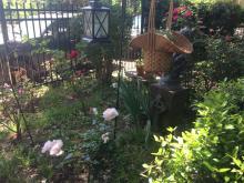 Roses Spring new garden