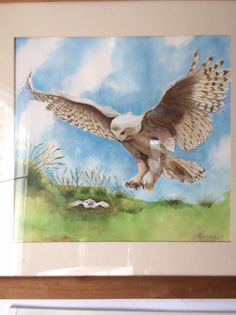 Old Bird Paintings 5