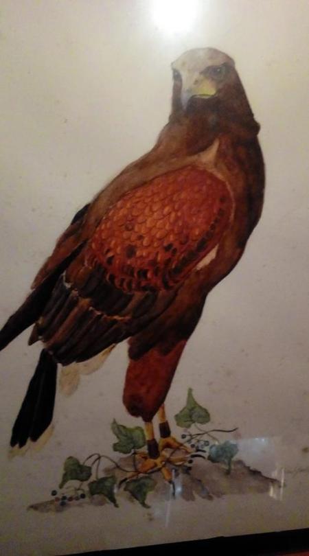 Sigi Steve's bird