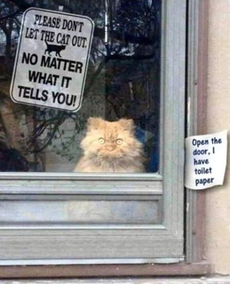 Cat Crazy.
